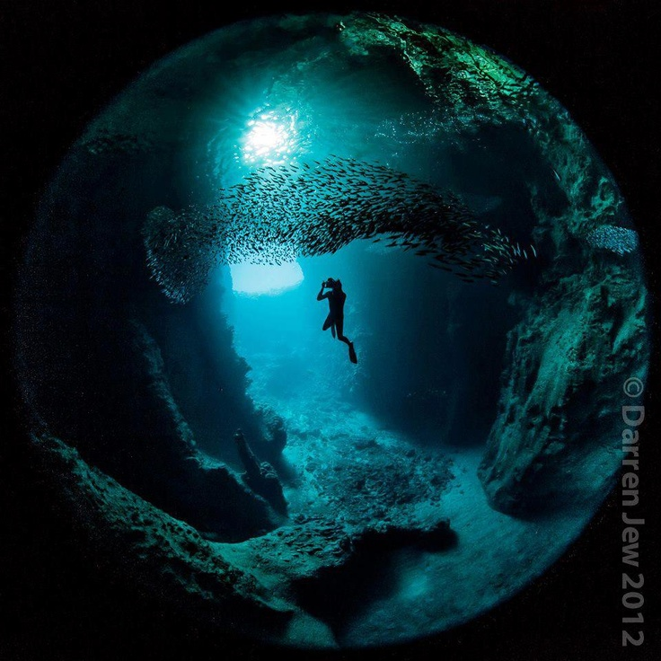 Swallow's Cave in Vava'u, Tonga. Photo by Darren Jew Photography