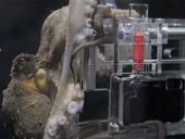 An octopus named Rambo has been given a waterproof camera and is taking photographs of visitors to her tank at Kelly Tarlton's Sea Life Aquarium in New Zealand.