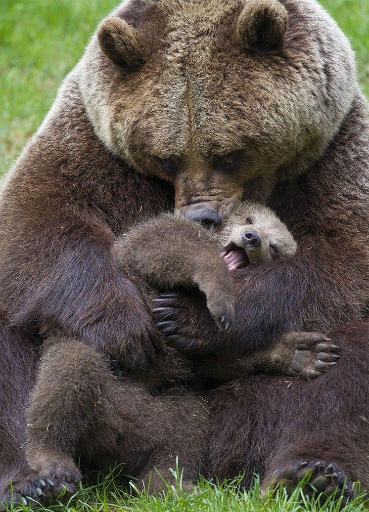 Mom please stop, the other cubs are watching!
