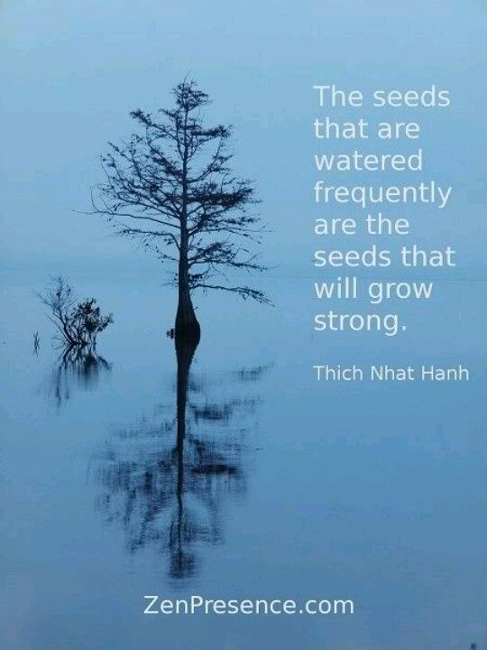 Thich Nhat Hanh                                                       …                                                                                                                                                                                 More