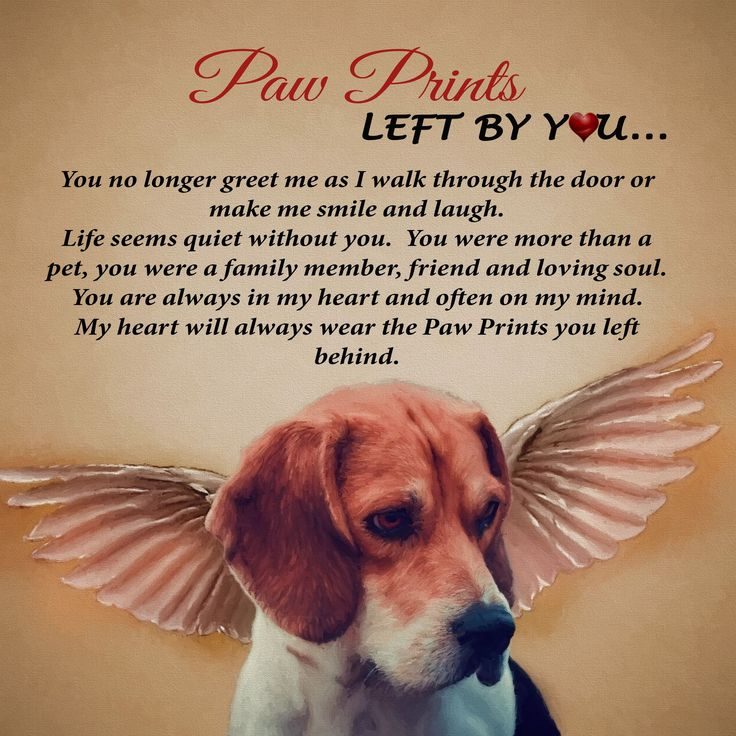 Dog Angel Quotes: 25+ Best Dog Loss Quotes On Pinterest