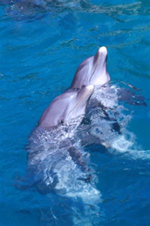 1000 Images About Dolphins On Pinterest Swim Swimming And The Wild
