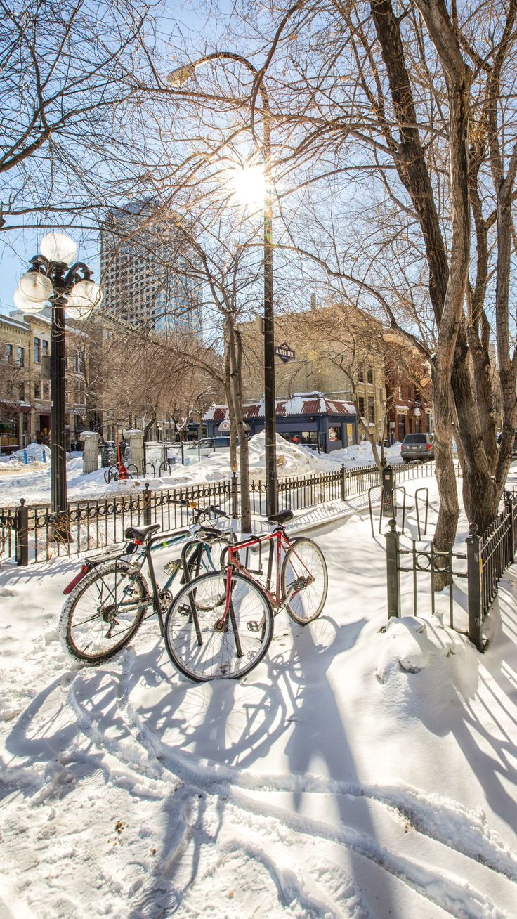Sunshine and bicycles in Winnipeg! Image by Carla Dyck