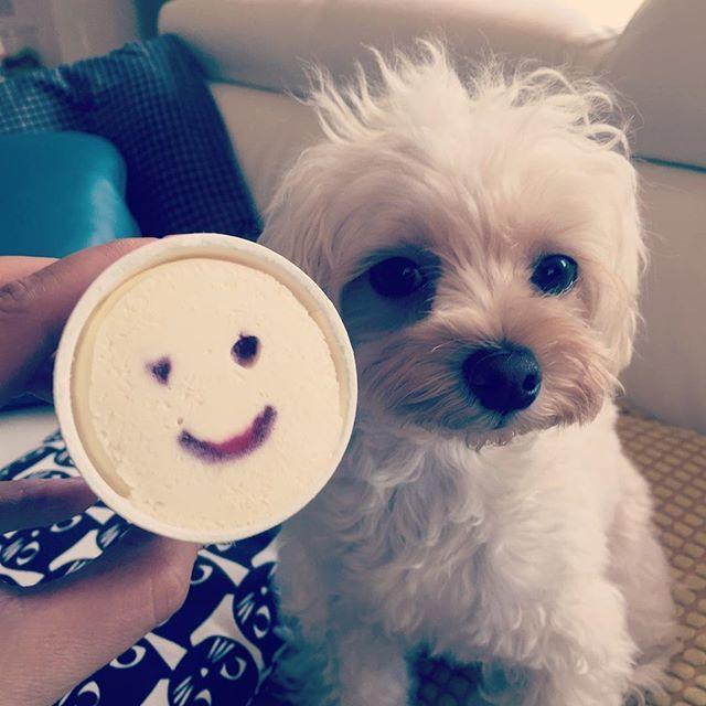 パナップとお多福🍦🍨 + パナップダイスキ😙 + + #instadog  #ハーフ犬 #マルプー  #マルチーズ #トイプードル #malpoo#toypoodle#maltese#Mix#dog#dogstagram#doglife#happydog#ilovedogs  #わんこ#犬#犬のいる生活#もふもふ#愛犬#犬ばか部 #マルプーお多福#お多福#オタ散歩#犬との暮らし#犬がいる生活#トイレトレーニング#ゲージきらい#アイス#パナップ#パナップスマイル