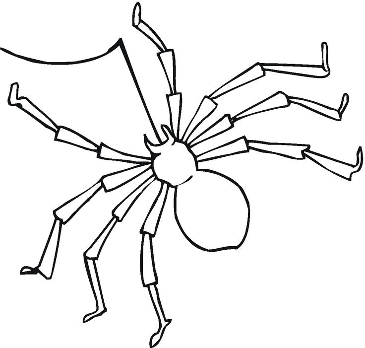 240 best clip and color part two images on pinterest | animal ... - Black Widow Spider Coloring Pages