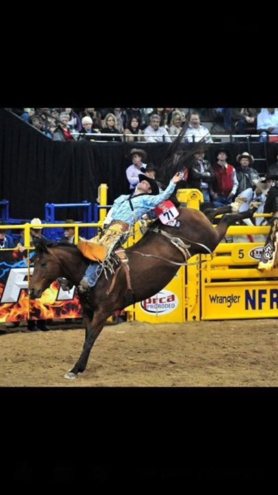 2248 Best Rodeo Images On Pinterest Bull Riders Rodeo