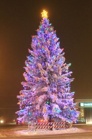 This tree was in the front yard of my sister's parish in Stettler (St. George's Anglican Church).  It needed to be removed, so the parish donated it to the Town.  It is a real show-stopper, right in the middle of an intersection in the middle of main street!