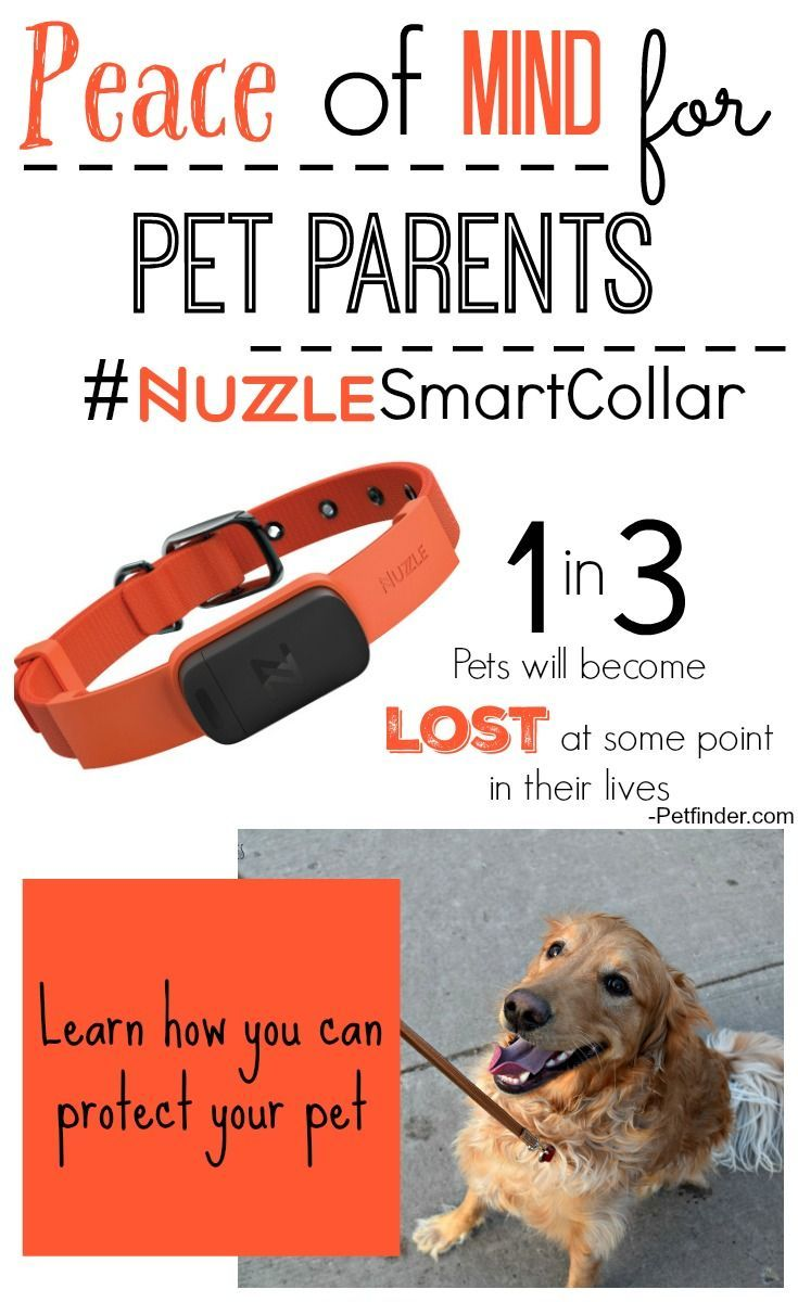 Peace of Mind with the Nuzzle Collar and App System Pet