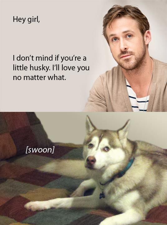These Hey Girl Ryan Gosling things are cracking me up today- google it!!
