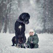 photo petit enfant gros chien