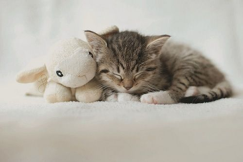 Kitty had a little lamb.