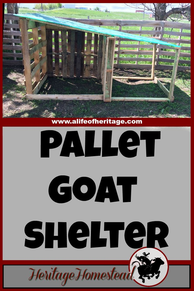 Goats | Pallets | Goat Shelter | How to build a goat shelter using pallets. An easy and cost effective way to use easy to find material to make great winter shelters for your goats.