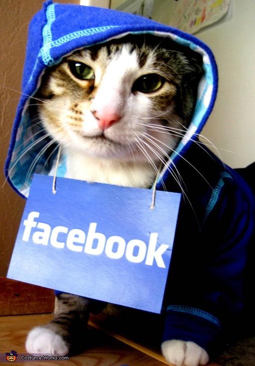 Facebook HoodieHomemade Pet Costumes Cat, 2012 Halloween, Pets Pics, Costumes Contest, Halloween Costumes, Facebook Cat, Facebook Hoodie, Hoodie Cat, Animal