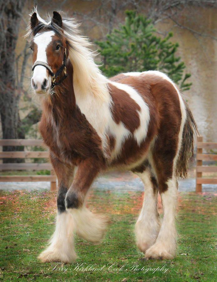 Huge Drum Horse Colt Noah (by Terry Kirkland Cook)