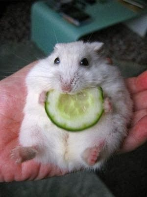 Cute mouse eating. - Cute animals world ¡¡¡YES, I AM FAT!!!!