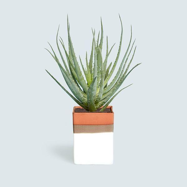 535 Best Office Plants Desk Mates Images On Pinterest