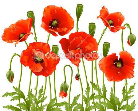 Lente bloemen: Papaver