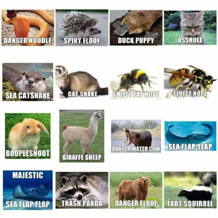 More realistic names for animals apparently lol