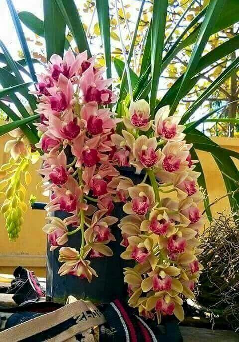 ✿⊱❥ Raridade ~ Orquídeas