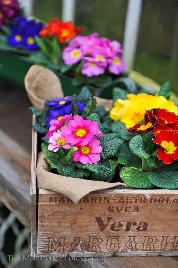 FLOWERS by titti & ingrid - En Påse Blommiga Karameller. Styling and photography © Titti Malmberg for HWIT BLOGG