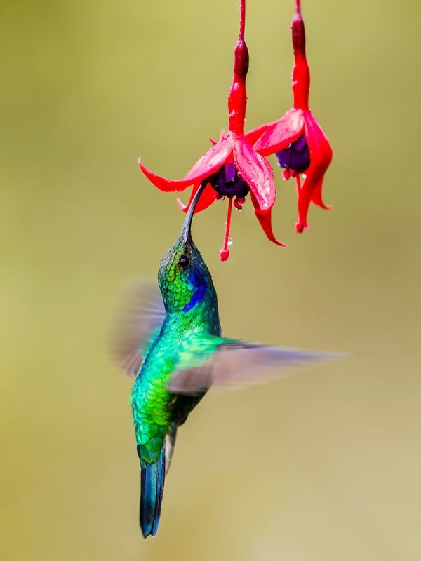 68ced5dcbd51c793c1bf2650e5195c55 - How To Get A Hummingbird To Land On Your Finger