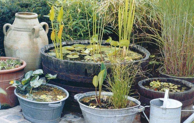 Leer snoeien een mini vijver maken waterplanten for Een vijver