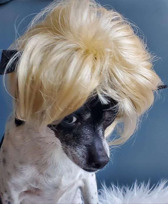Pet   wig blond  color   for dog or cat  wig for pet Halloween pet wig  Costume wig for dogs