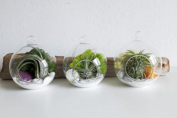 Customised air plant terrarium kit  personalised by AlvinaDecco