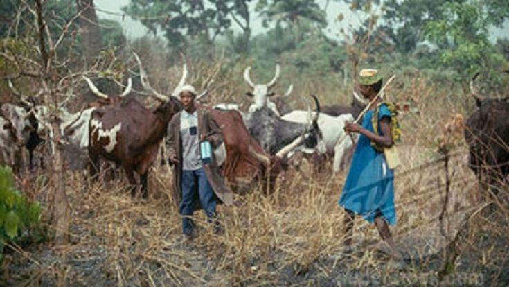Istifanus Gyang said that killer Fulani herdsmen should be profiled and classified by the FG as insurgents and be treated like the Boko Haram terrorist.....