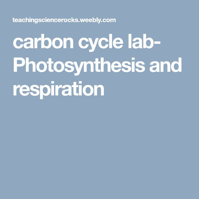 carbon cycle lab- Photosynthesis and respiration