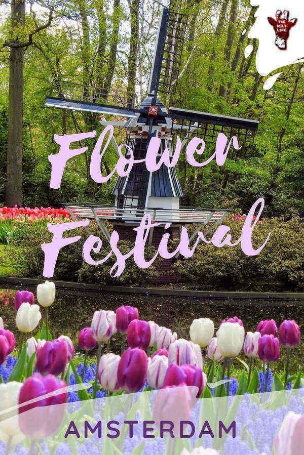 Amsterdam Flower Festival Tulip Fields Netherlands In 2020