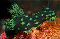 Испанский танцор Подводный мир