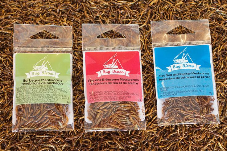 Inside The Edible Insect Industrial Complex | Fast Company | Business + Innovation