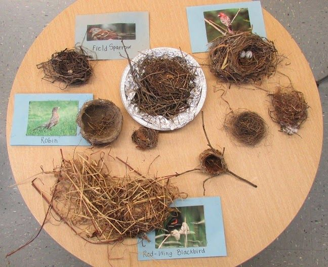 Kindergarten: Holding Hands and Sticking Together: Bird Nests and Birds... great bird unit with loads of freebies