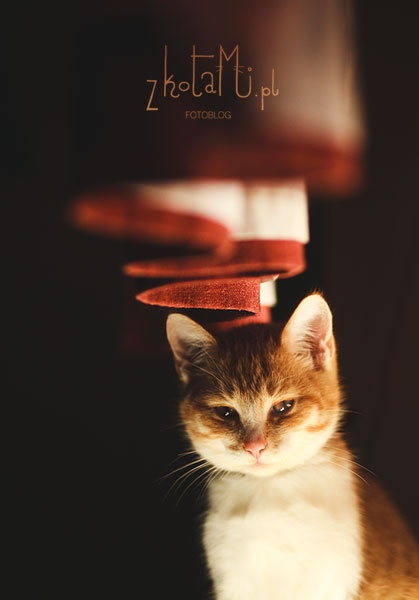 Wise thoughts of a little kitten
