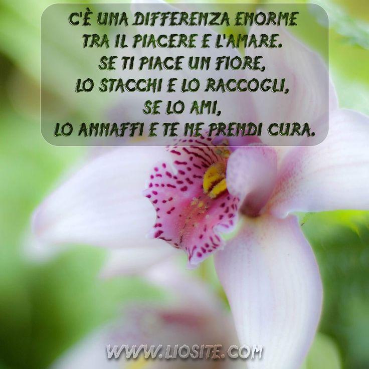 C'è una differenza enorme tra ...  Vero!!  #liosite, #citazioniItaliane, #frasibelle, #ItalianQuotes, #Sensodellavita, #perledisaggezza, #perledacondividere, #GraphTag, #ImmaginiParlanti, #citazionifotografiche,