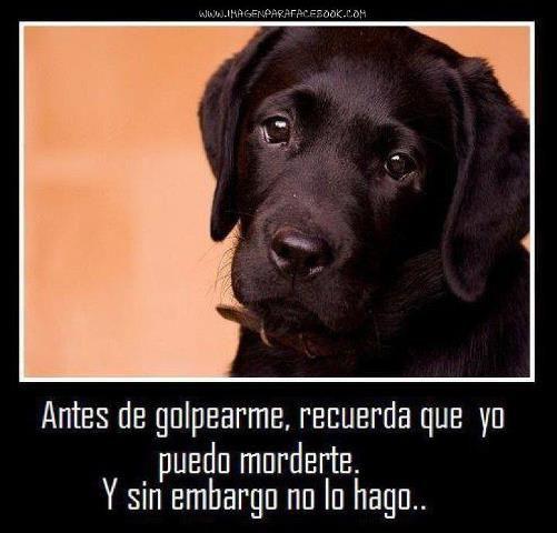 Imagenes de Animales Graciosos | Imagenes Graciosas, Divertidas, Chistosas, Bonitas, con Frases, etc...