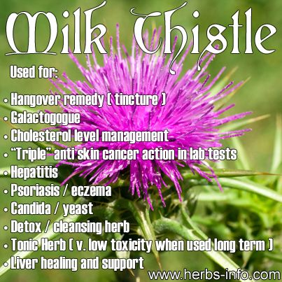 ❤ Herb Of The Day: Milk Thistle ❤