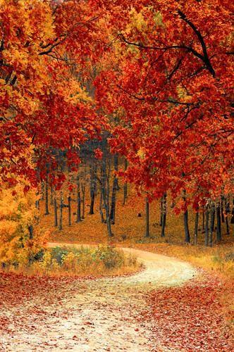 Autumn Driveway Orange Leaves Background Printed Backdrop – 6792 – Joy Guydan