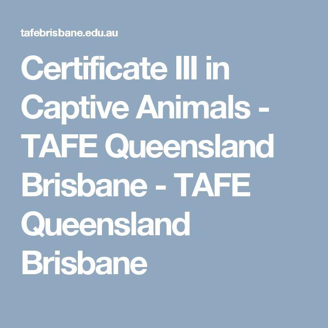 Certificate III in Captive Animals - TAFE Queensland Brisbane - TAFE Queensland Brisbane