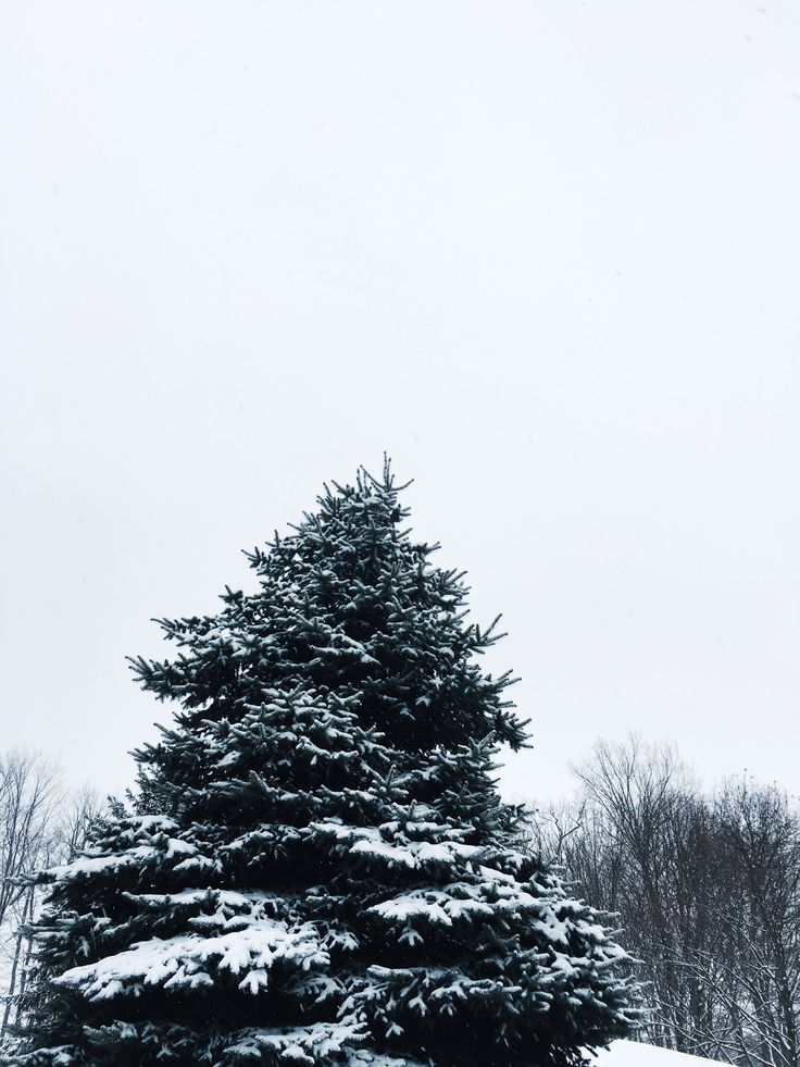 Finding the magic in Canadian winters <3