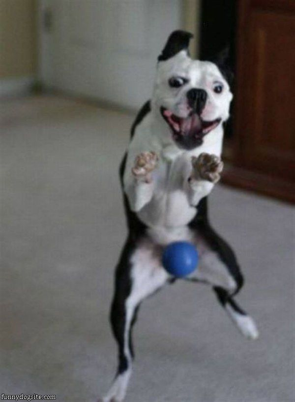 Ugly Dog Pictures Funny | Funny Dog Cartoon Pictures | Cat And Dog Pictures With Funny Captions