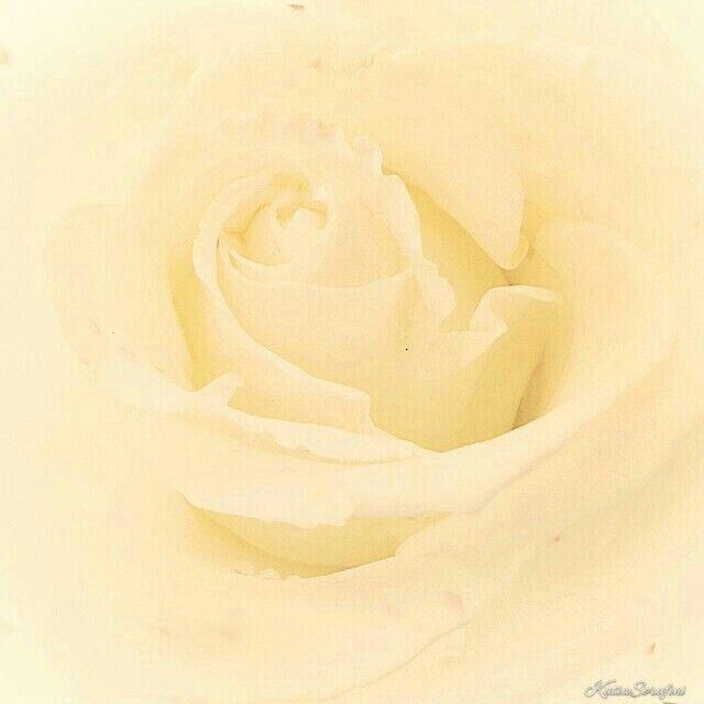 """""""Bianco, se il mio amore avesse un colore, non sarebbe rosso cuore, ma bianco. Puro, innocente, tenero, che invita a dolci e delicati pensieri, ma allo stesso tempo forte, tanto forte da reggere in sé tutti gli altri colori. Allo stesso modo ciò che sento è somma d'emozione, mistura suprema e perfetta, voce dell'anima, coro armonioso del più intenso mio sentire."""" (tr. Anton Vanlight)"""