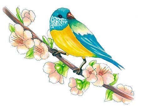 Spring bird | drawn by Anastasia Opachanova
