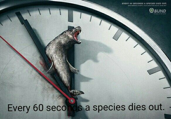 Every 60 seconds a species dies out.