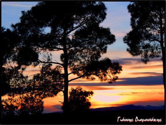 Ηλιοβασιλέματα....στα πεύκα και στα έλατα...