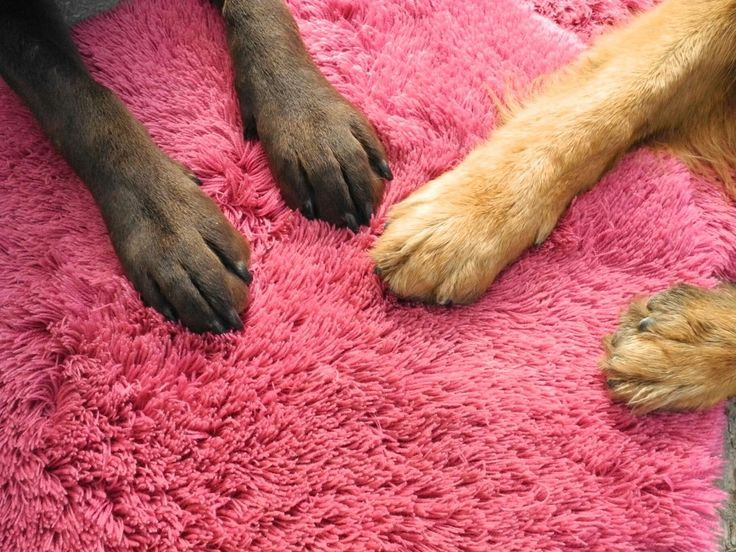 Dog and cat-lovers on the subcontinent increasingly are turning to pet psychics.