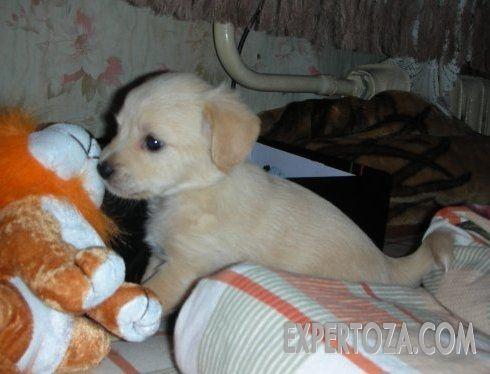 В доме появился щенок, что делать? Собаки — очень умные животные. Но в детстве они такие же несмышленые как и все дети, детеныши животных. Малыши еще не знают что можно, что нельзя. Но не надо бояться, все поправимо.