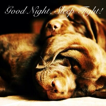 Image result for good night quotes blingee animal images
