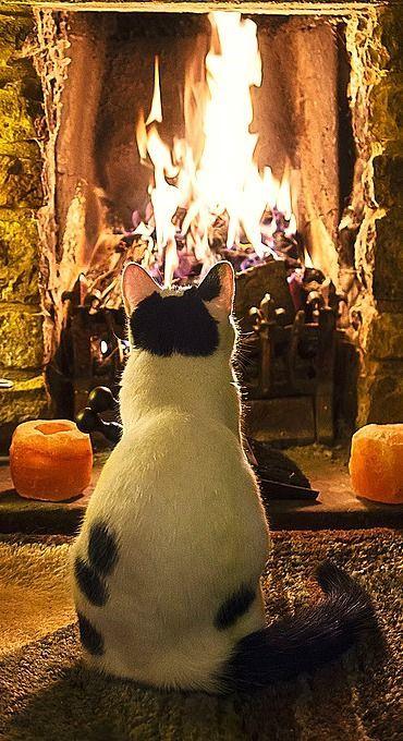 Caminetto rustico, colori caldi e un pò di compagnia. #Dalani #Animali #Capodanno #Casa